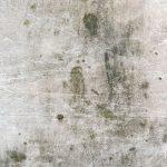 Dónde se esconde el moho en tu hogar y cómo eliminarlo